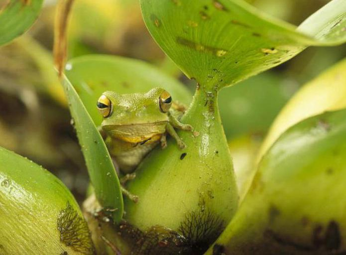 чем отличается лягушка от жабы различия