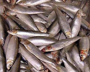 шпроты делают из какой рыбы