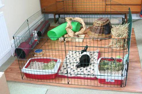 что едят кролики в домашних условиях