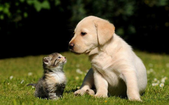 world of cats and dogs