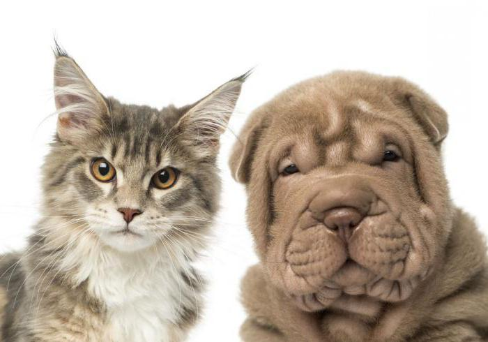 about cats and dogs surrounding