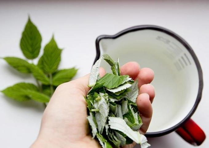 tea from raspberry leaves benefit and harm