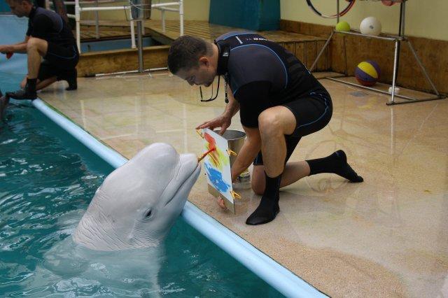 Rostov dolphinarium work schedule
