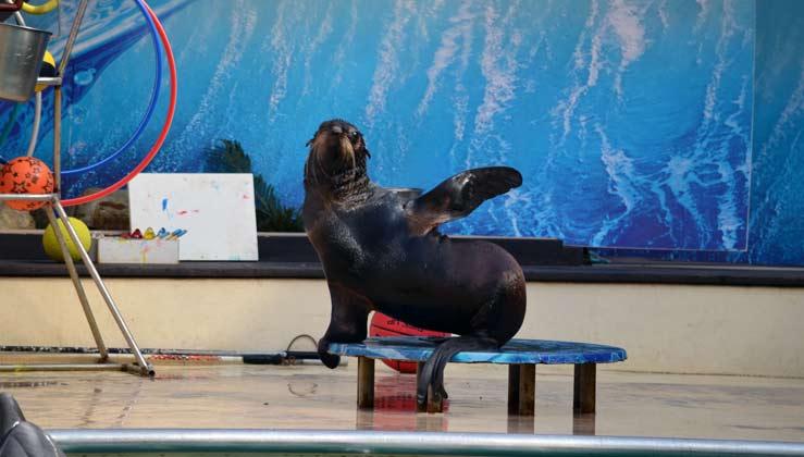 Rostov Dolphinarium prices address and schedule