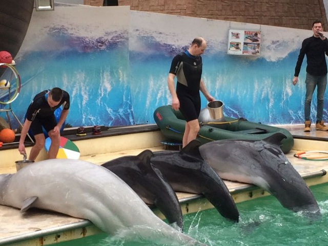 Address of the Rostov Dolphinarium