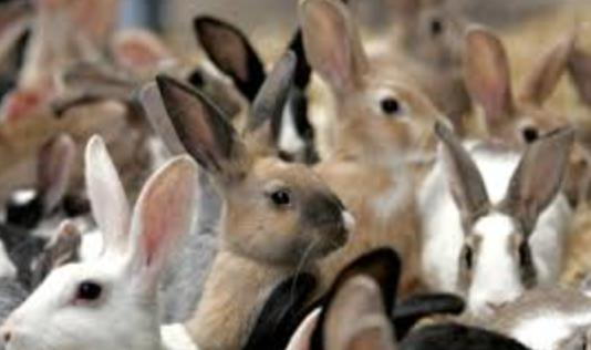стая кроликов