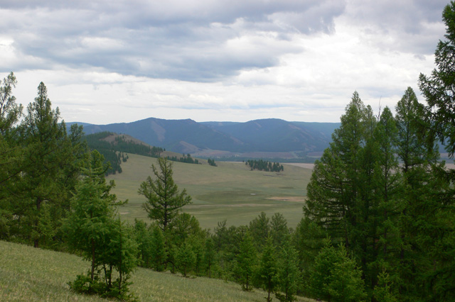 What is the soil in the forest-steppe