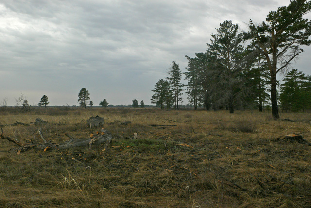 Forest-steppe: soil type