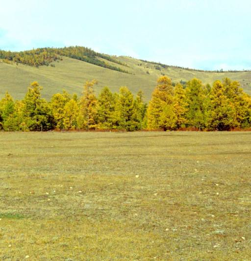 Forest-steppe: soil properties