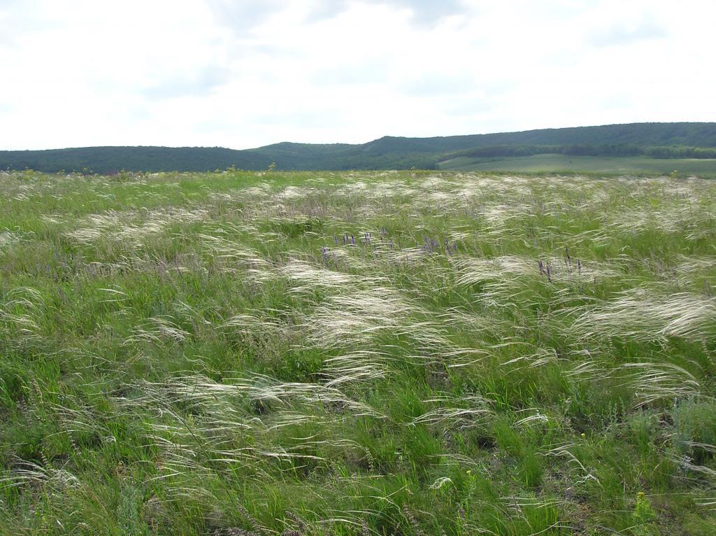 Soil steppe