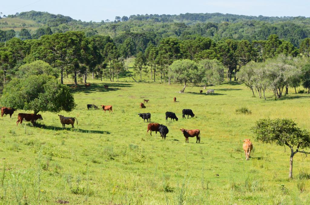 What soils prevail in the forest-steppe