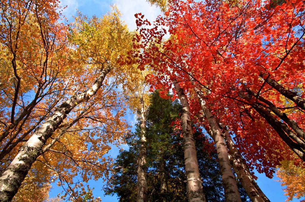 Сроки листопада у разных деревьев