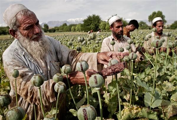 Afghanistan per capita GDP