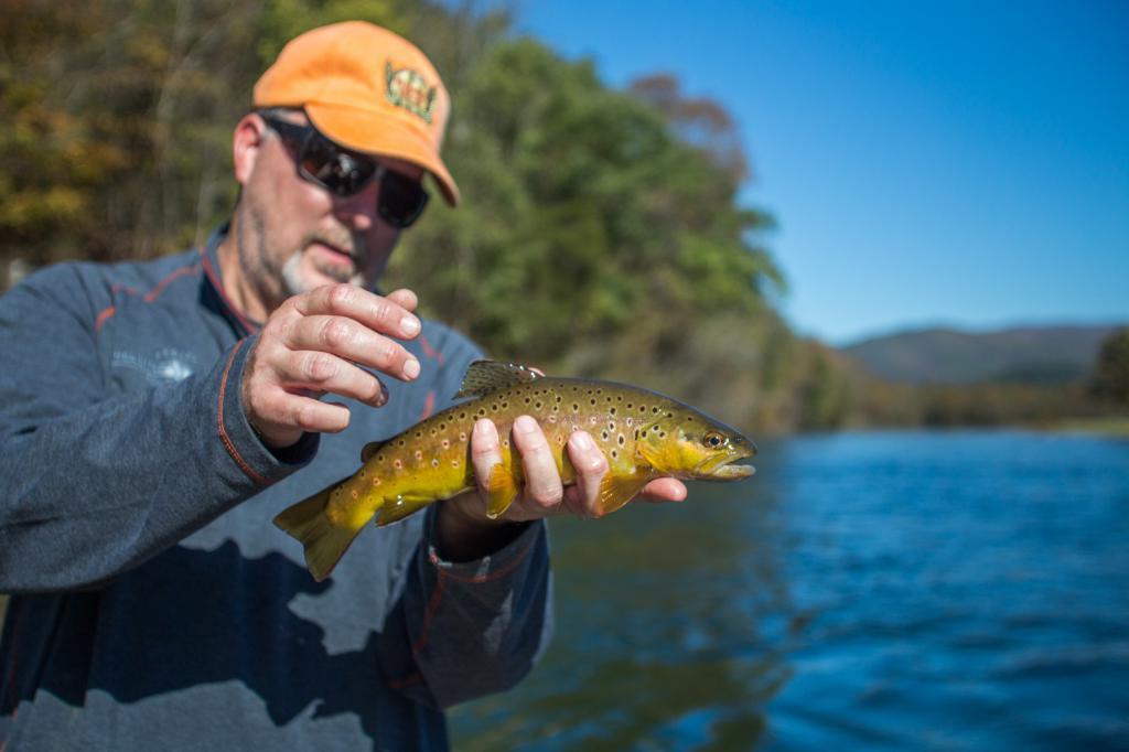 Сонник поймать руками рыбу во сне к чему снится поймать руками рыбу