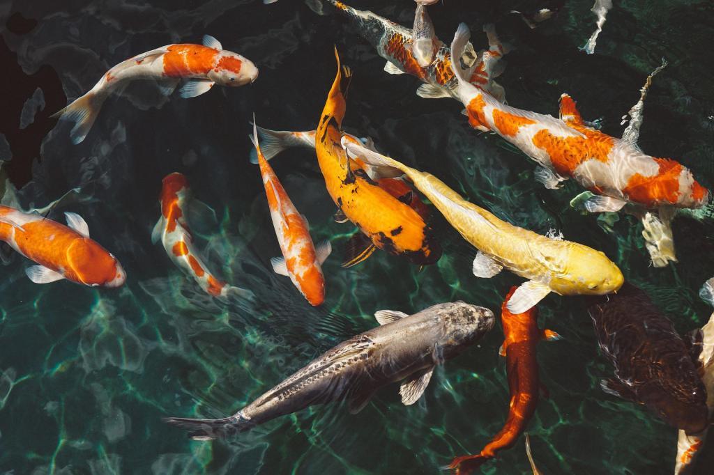 к чему снится большая живая рыба