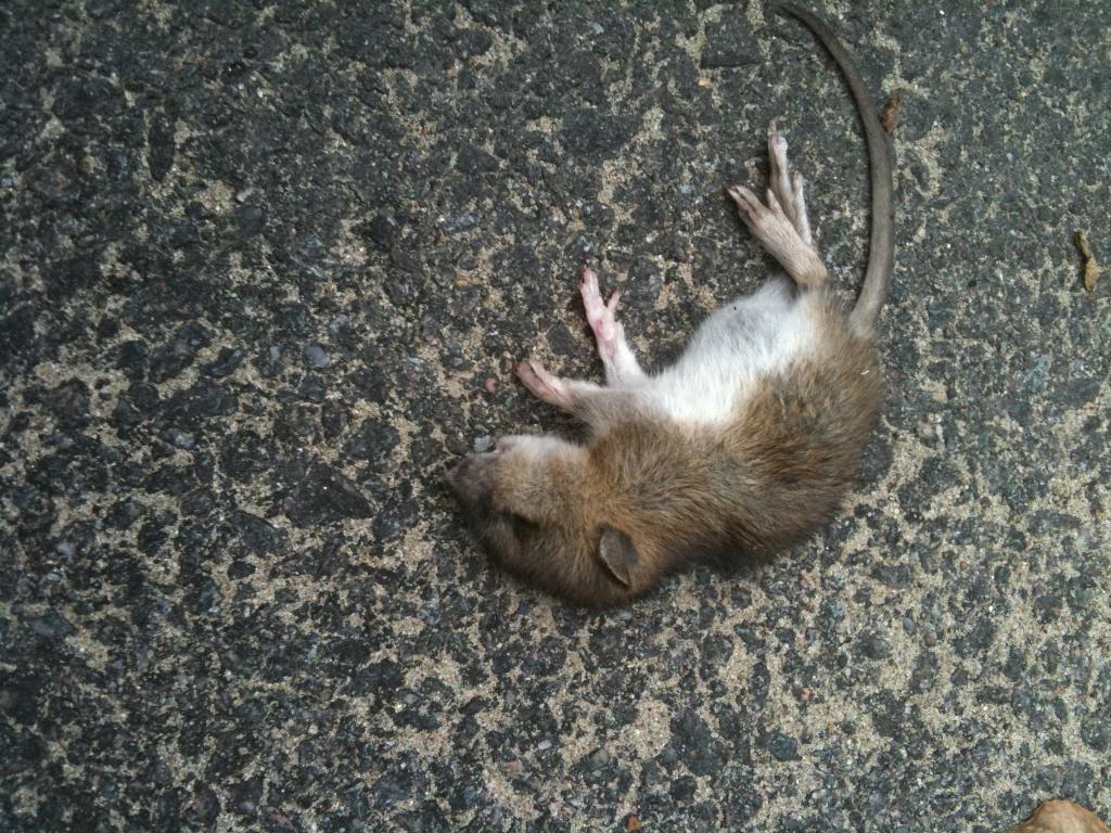 Дохлые мыши