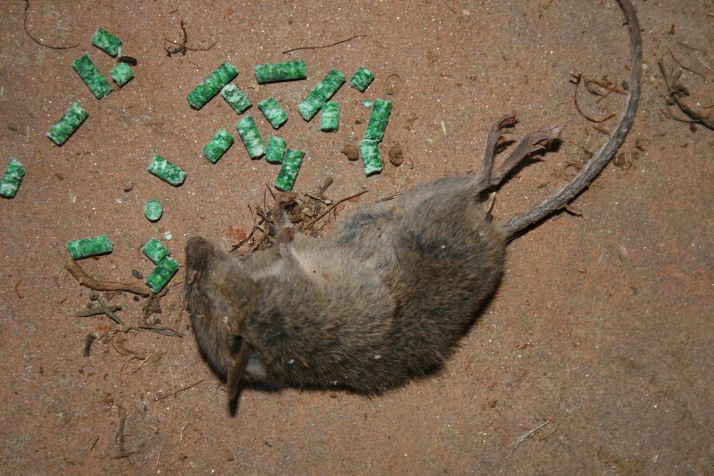 Dead mice in a dream