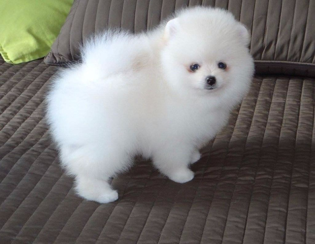 what is the cutest animal