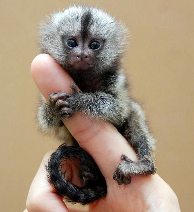 top cutest animals in the world