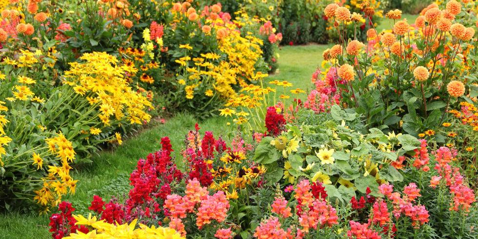 Растения осенних цветников названия и фото легенды и