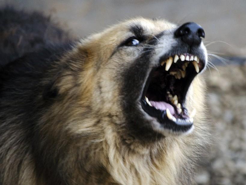 к чему снится большая злая собака