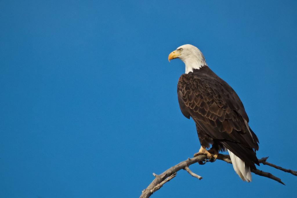 отличается картинка орел сидит так для