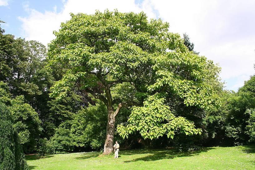 сонник люди на деревьях