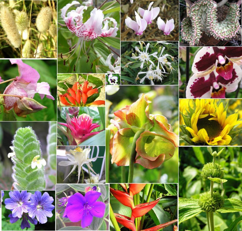 Картинки всех видов растений