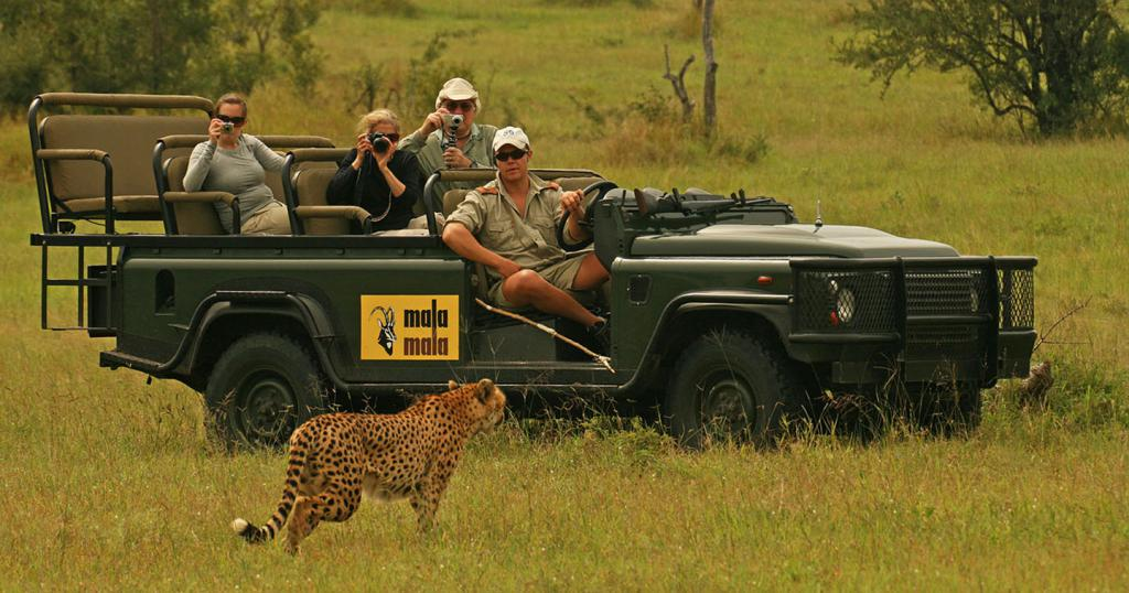 Jeep tour, familiarity with wildlife