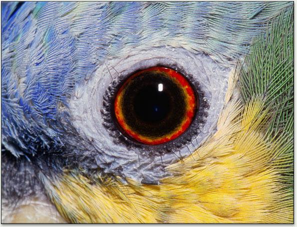 leading bird analyzer