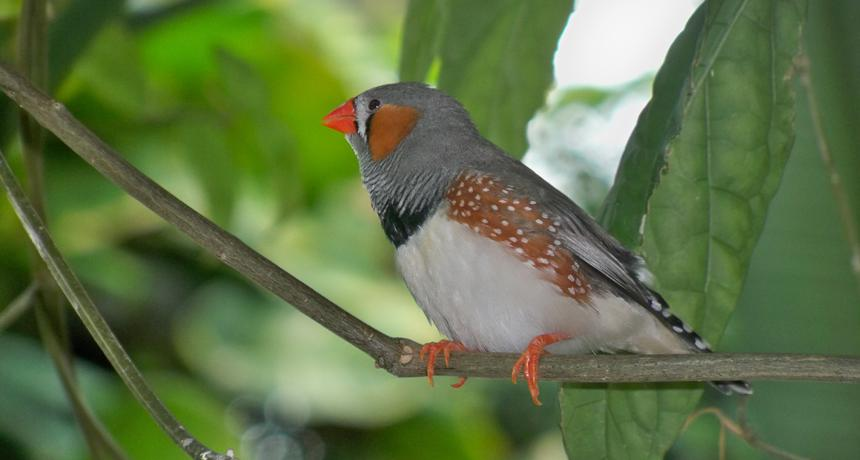 importance of birds for humans