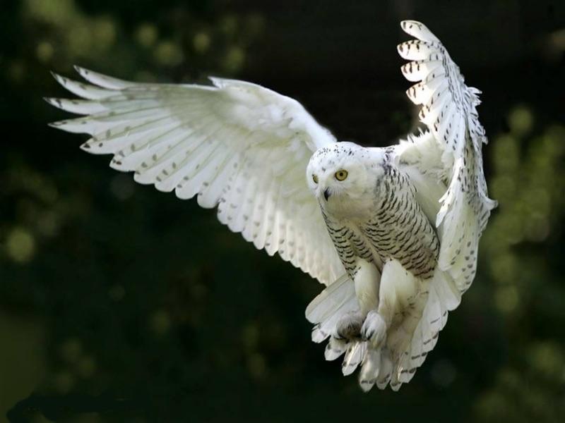bird intelligence