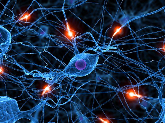 mediators of the nervous system