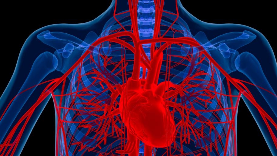 Уплотнение аорты - что это такое? Каково лечение при уплотнении стенок аорты? Из-за чего может произойти уплотнение аорты
