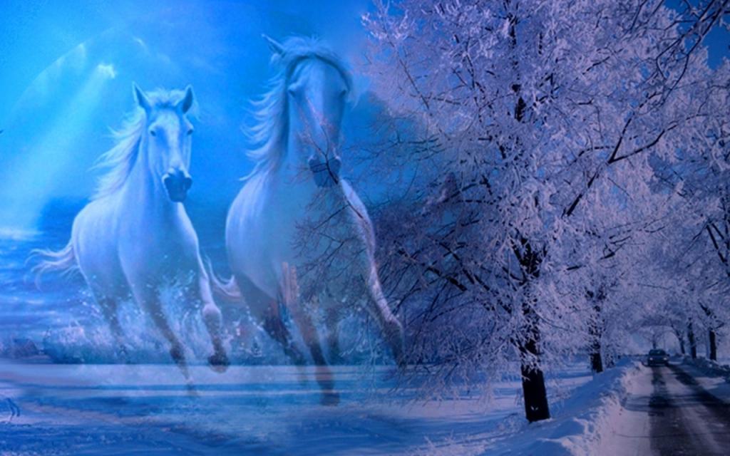 Three white horses