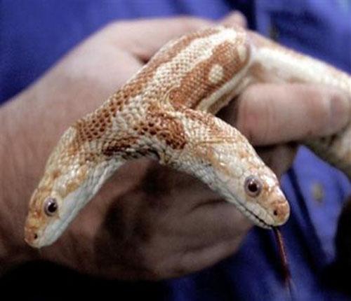 Знаменитая змея Мы