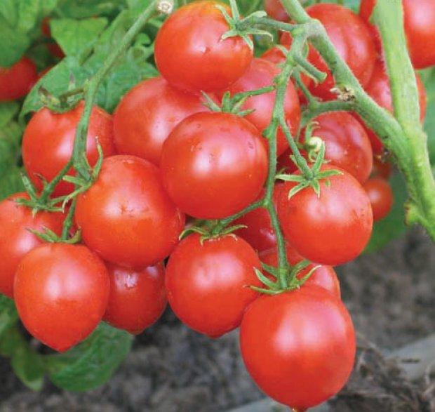 Determinant Tomatoes Alpha