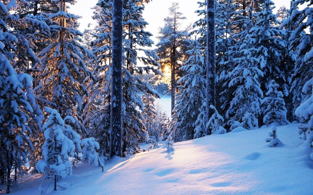 winter taiga