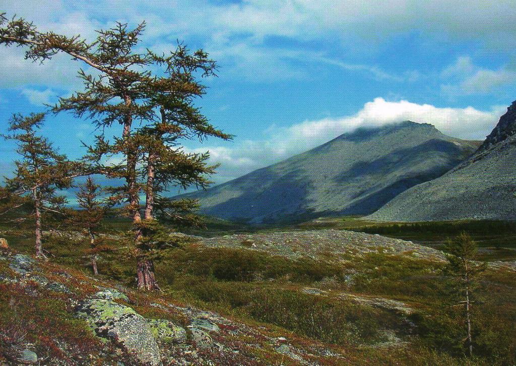 Горы девственных лесов