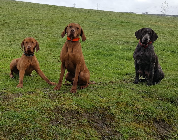 three dogs in the meadow