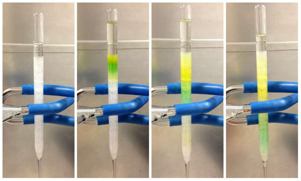 separation of chlorophylls a and c