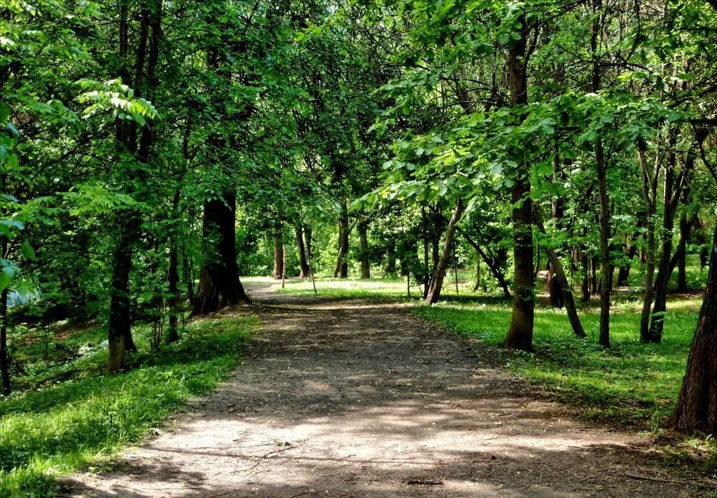Grachevsky Park