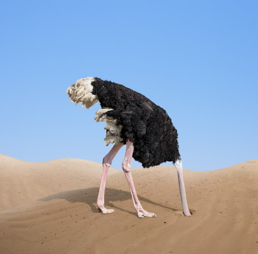 delusions of ostrich