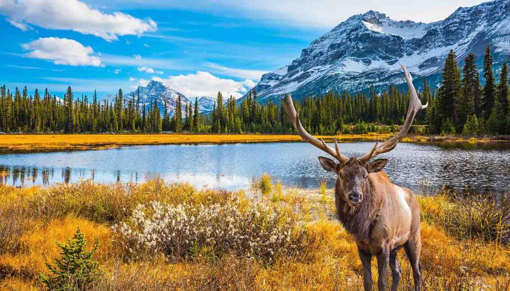 deer on the lake