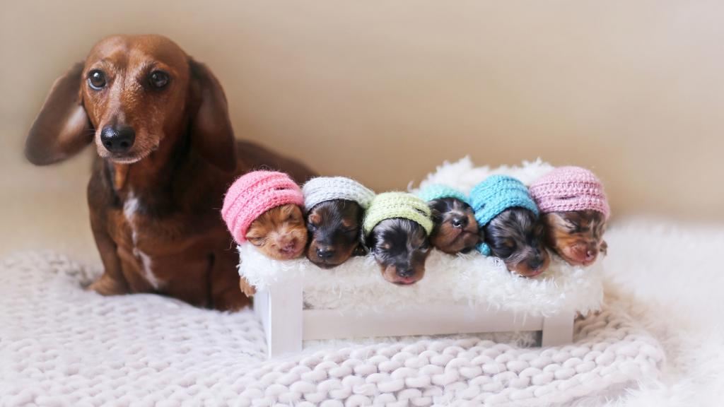 "Application ""Gamavita"" for dogs"