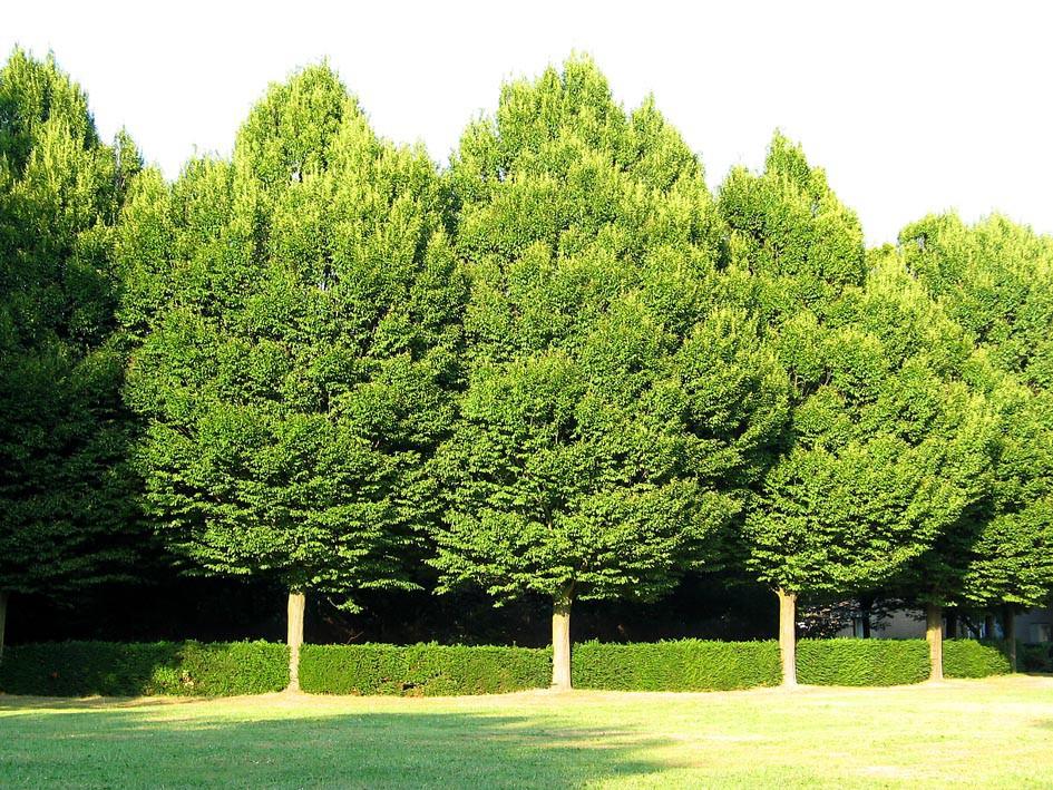 деревья фотографии с названиями можно