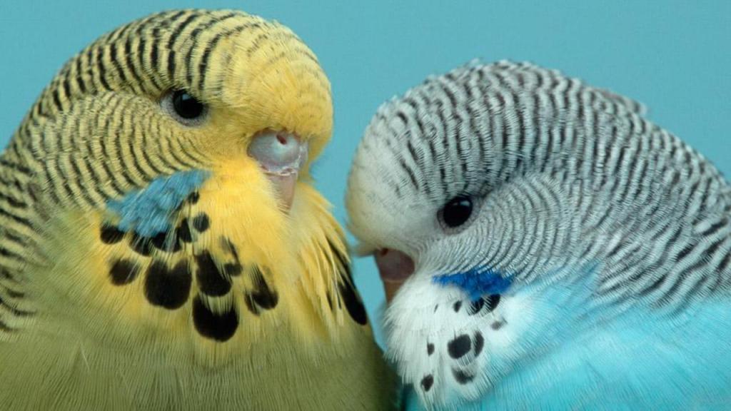 colors of parrots