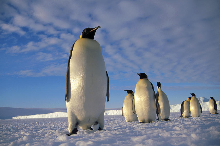 Поселение пингвинов