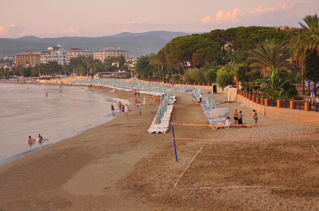 lonicera world 4 beach