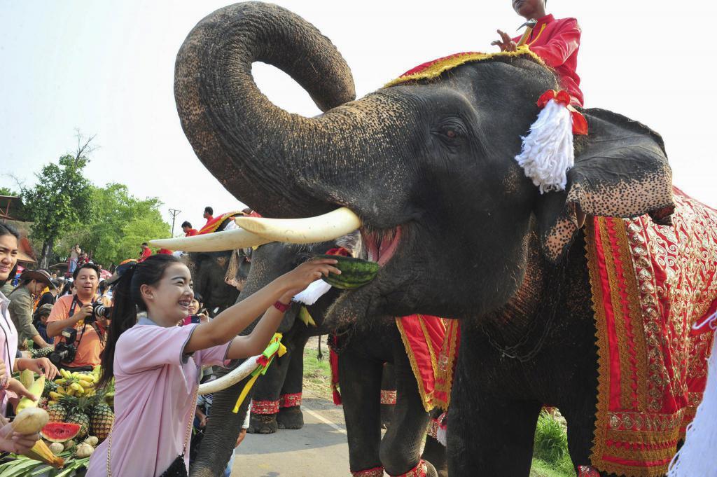 Elephant day celebration